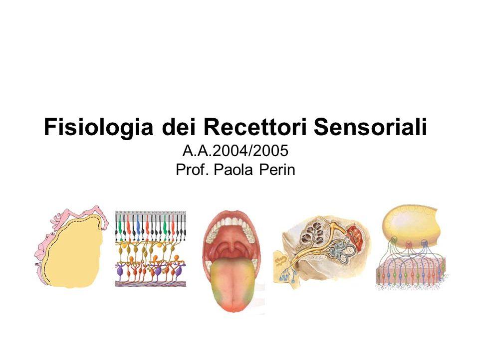 Fisiologia dei Recettori Sensoriali A.A.2004/2005 Prof. Paola Perin