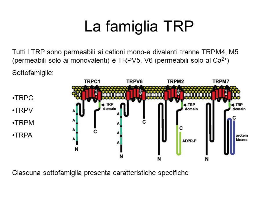 La famiglia TRP Tutti I TRP sono permeabili ai cationi mono-e divalenti tranne TRPM4, M5 (permeabili solo ai monovalenti) e TRPV5, V6 (permeabili solo al Ca 2+ ) Sottofamiglie: TRPC TRPV TRPM TRPA Ciascuna sottofamiglia presenta caratteristiche specifiche