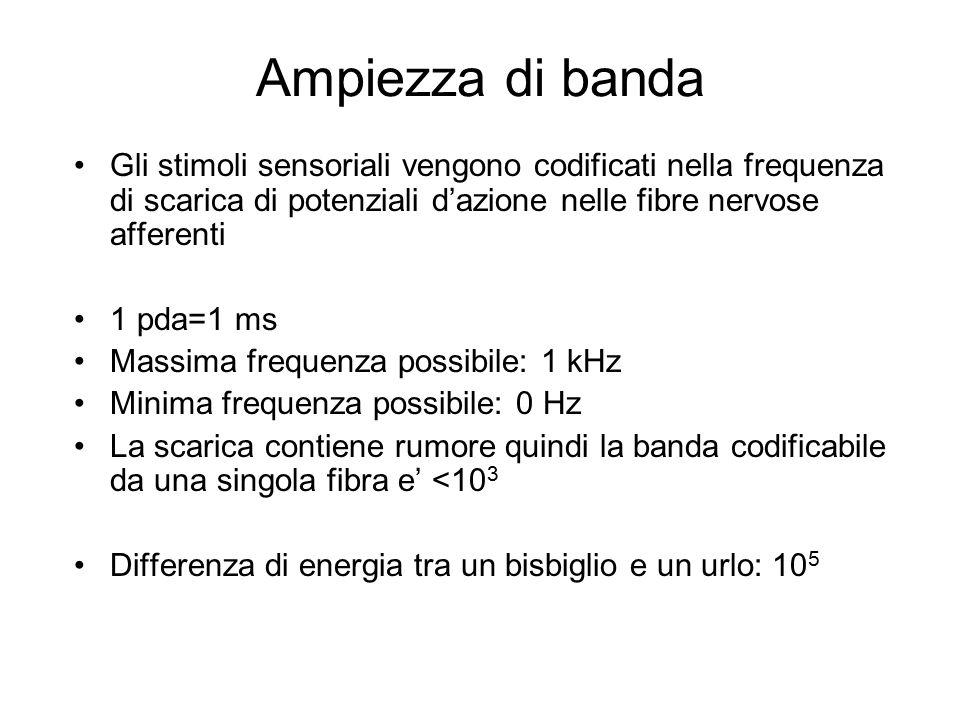 Ampiezza di banda Gli stimoli sensoriali vengono codificati nella frequenza di scarica di potenziali d'azione nelle fibre nervose afferenti 1 pda=1 ms Massima frequenza possibile: 1 kHz Minima frequenza possibile: 0 Hz La scarica contiene rumore quindi la banda codificabile da una singola fibra e' <10 3 Differenza di energia tra un bisbiglio e un urlo: 10 5