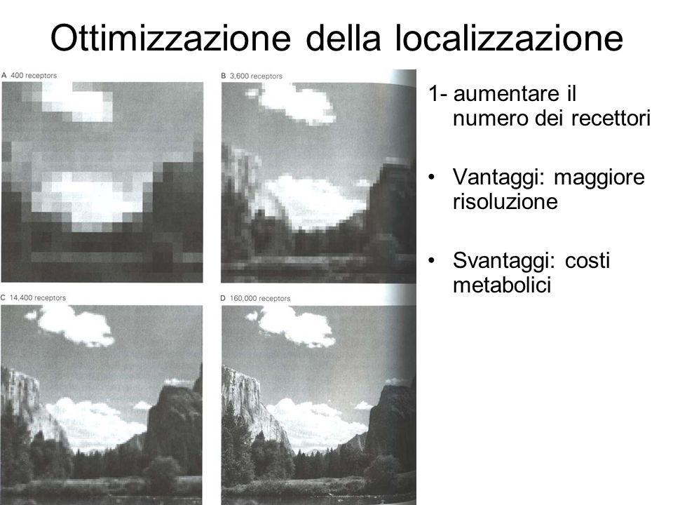 Ottimizzazione della localizzazione 1- aumentare il numero dei recettori Vantaggi: maggiore risoluzione Svantaggi: costi metabolici