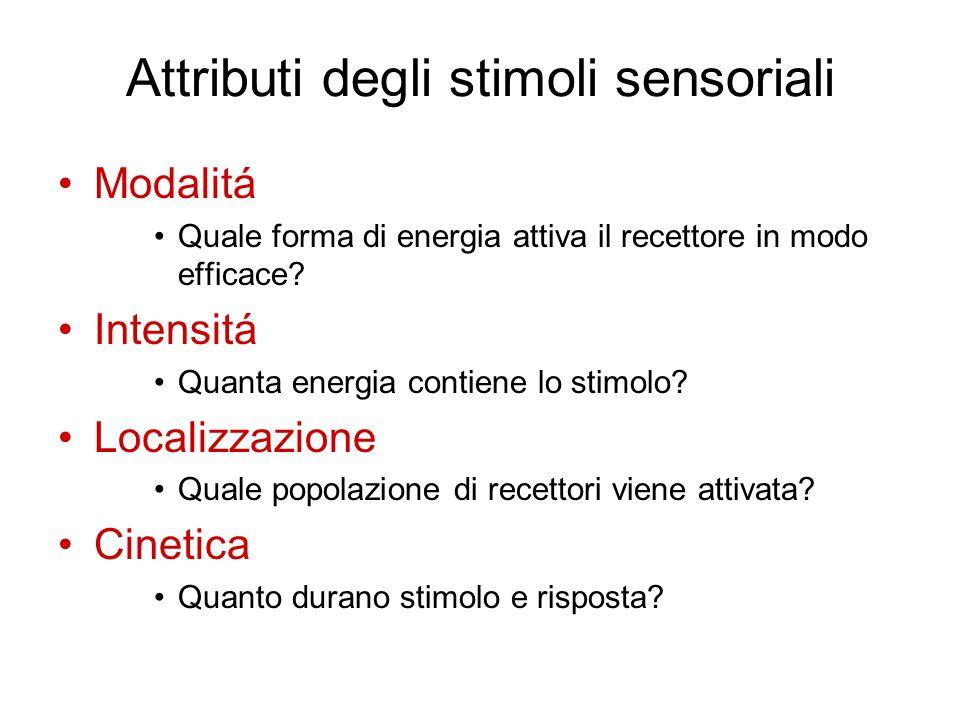 Attributi degli stimoli sensoriali Modalitá Quale forma di energia attiva il recettore in modo efficace? Intensitá Quanta energia contiene lo stimolo?