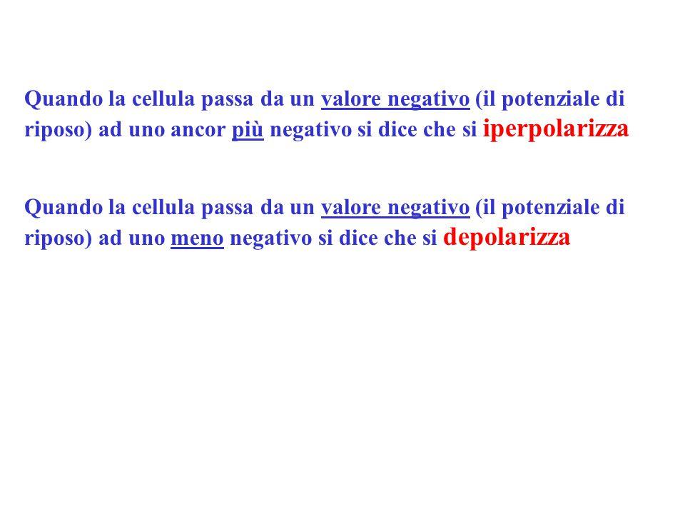 Quando la cellula passa da un valore negativo (il potenziale di riposo) ad uno ancor più negativo si dice che si iperpolarizza Quando la cellula passa da un valore negativo (il potenziale di riposo) ad uno meno negativo si dice che si depolarizza