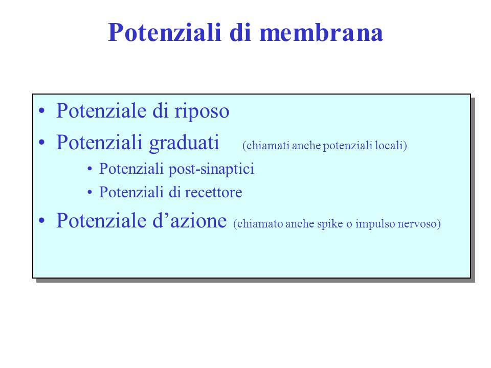 Potenziali di membrana Potenziale di riposo Potenziali graduati (chiamati anche potenziali locali) Potenziali post-sinaptici Potenziali di recettore Potenziale d'azione (chiamato anche spike o impulso nervoso) Potenziale di riposo Potenziali graduati (chiamati anche potenziali locali) Potenziali post-sinaptici Potenziali di recettore Potenziale d'azione (chiamato anche spike o impulso nervoso)