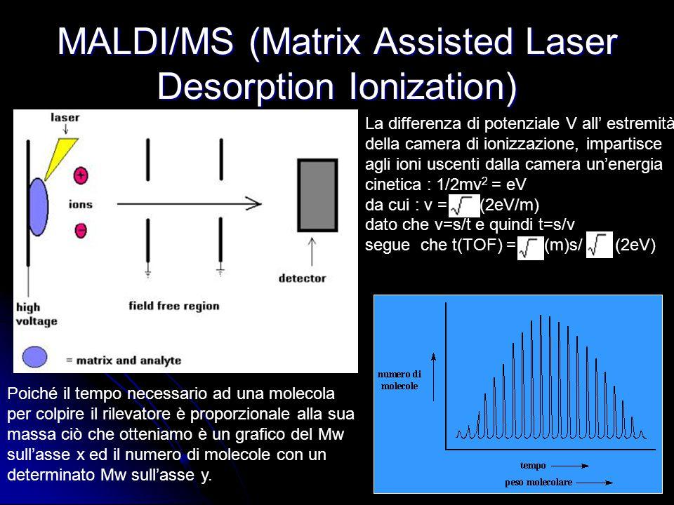 MALDI/MS (Matrix Assisted Laser Desorption Ionization) La differenza di potenziale V all' estremità della camera di ionizzazione, impartisce agli ioni uscenti dalla camera un'energia cinetica : 1/2mv 2 = eV da cui : v = (2eV/m) dato che v=s/t e quindi t=s/v segue che t(TOF) = (m)s/ (2eV) Poiché il tempo necessario ad una molecola per colpire il rilevatore è proporzionale alla sua massa ciò che otteniamo è un grafico del Mw sull'asse x ed il numero di molecole con un determinato Mw sull'asse y.