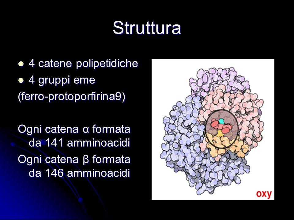 Anomalie nella sintesi della globina possono tradursi in: a)Alterazioni qualitative della sequenza degli amminoacidi (emoglobinopatie) b)Alterazioni quantitative della sintesi di una delle catene della globina (sindromi talassemiche) Sintesi della globina
