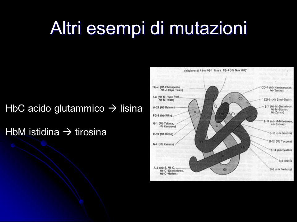 Altri esempi di mutazioni HbC acido glutammico  lisina HbM istidina  tirosina