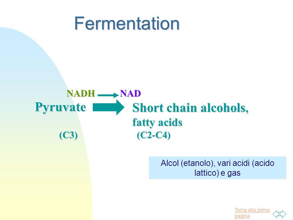 Torna alla prima paginaFermentation Pyruvate Pyruvate (C3) NADH NADHNAD Short chain alcohols, fatty acids (C2-C4) Alcol (etanolo), vari acidi (acido lattico) e gas