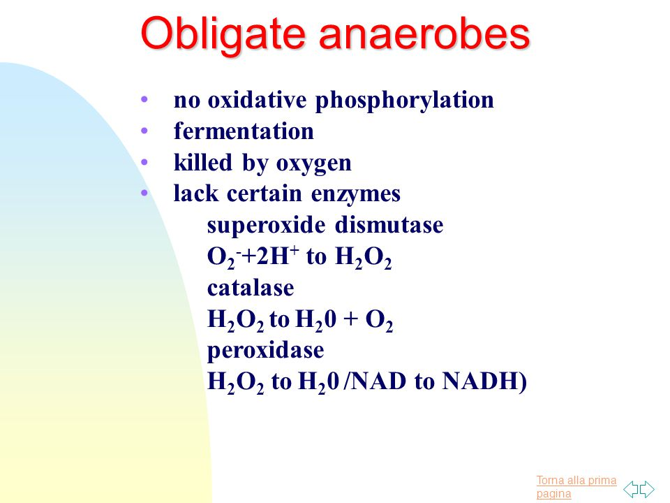 Torna alla prima pagina no oxidative phosphorylation fermentation killed by oxygen lack certain enzymes superoxide dismutase O 2 - +2H + to H 2 O 2 catalase H 2 O 2 to H 2 0 + O 2 peroxidase H 2 O 2 to H 2 0 /NAD to NADH) Obligate anaerobes