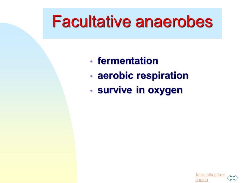 Torna alla prima pagina Facultative anaerobes fermentation fermentation aerobic respiration aerobic respiration survive in oxygen survive in oxygen