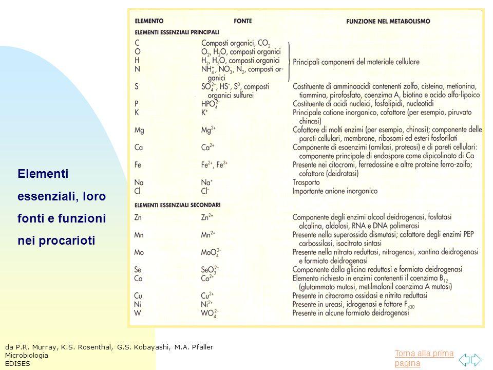 Torna alla prima pagina Elementi essenziali, loro fonti e funzioni nei procarioti da P.R.