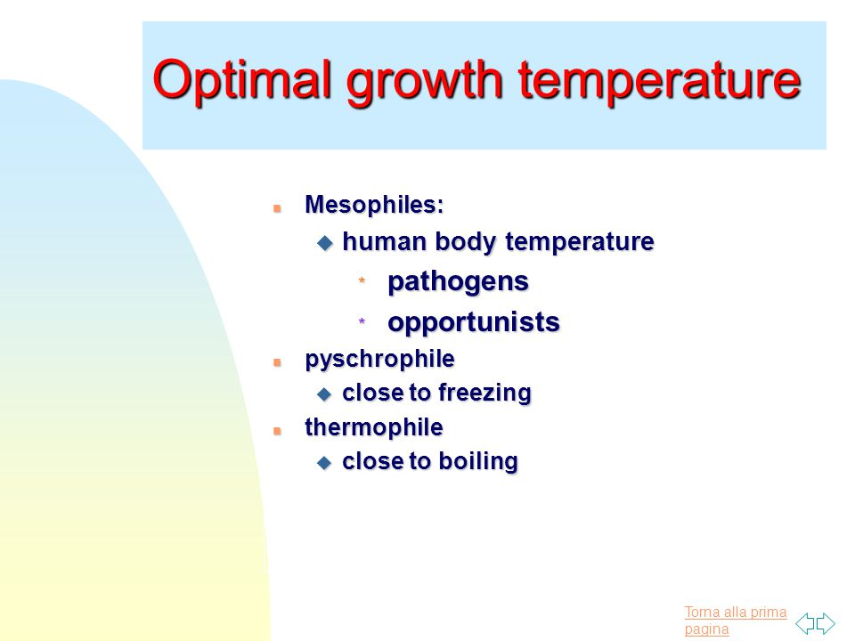 Torna alla prima pagina Optimal growth temperature n Mesophiles: u human body temperature * pathogens * opportunists n pyschrophile u close to freezing n thermophile u close to boiling