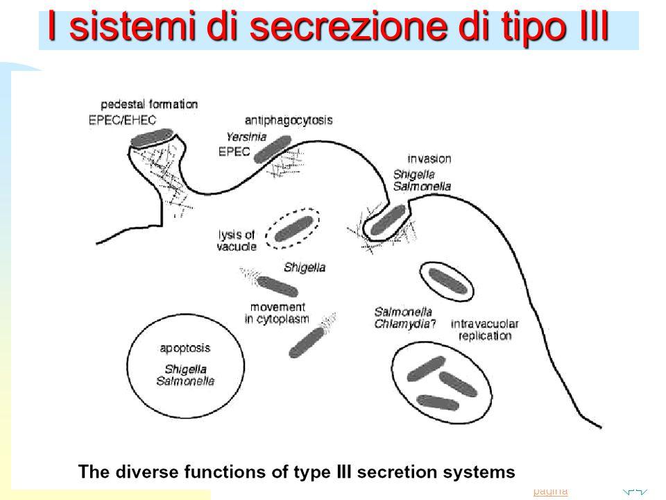 Torna alla prima pagina I sistemi di secrezione di tipo III