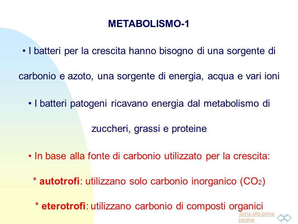 Torna alla prima pagina METABOLISMO-1 I batteri per la crescita hanno bisogno di una sorgente di carbonio e azoto, una sorgente di energia, acqua e vari ioni I batteri patogeni ricavano energia dal metabolismo di zuccheri, grassi e proteine In base alla fonte di carbonio utilizzato per la crescita: * autotrofi: utilizzano solo carbonio inorganico (CO 2 ) * eterotrofi: utilizzano carbonio di composti organici