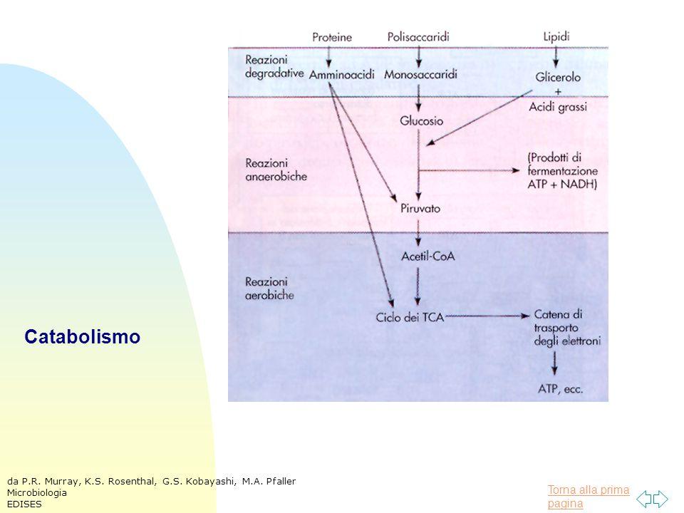 Torna alla prima pagina Catabolismo da P.R. Murray, K.S. Rosenthal, G.S. Kobayashi, M.A. Pfaller Microbiologia EDISES