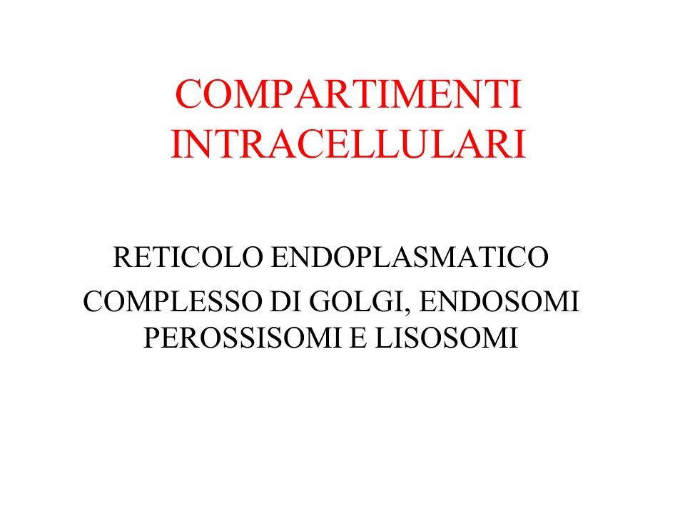 COMPARTIMENTI INTRACELLULARI RETICOLO ENDOPLASMATICO COMPLESSO DI GOLGI, ENDOSOMI PEROSSISOMI E LISOSOMI