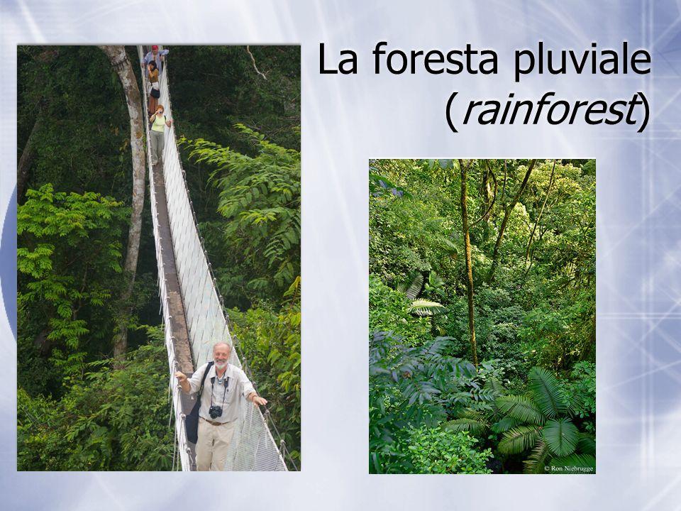 La foresta pluviale (rainforest)