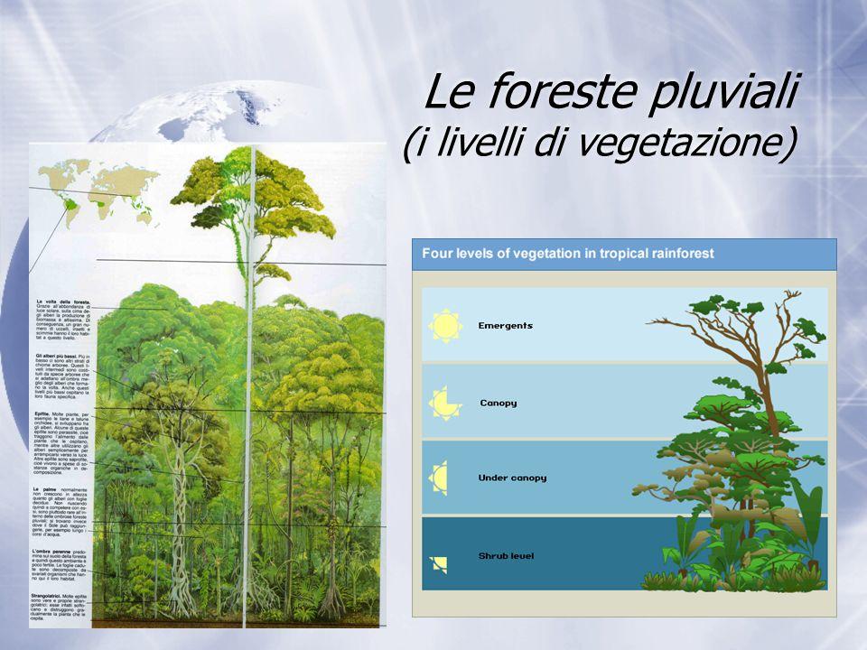 Le foreste pluviali (i livelli di vegetazione)