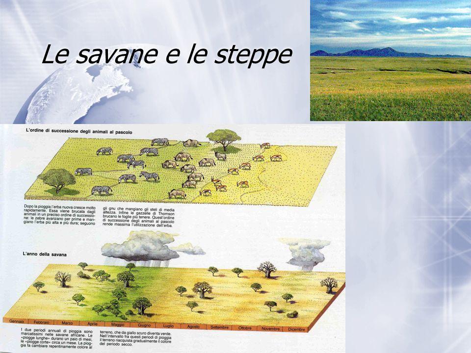 Le savane e le steppe