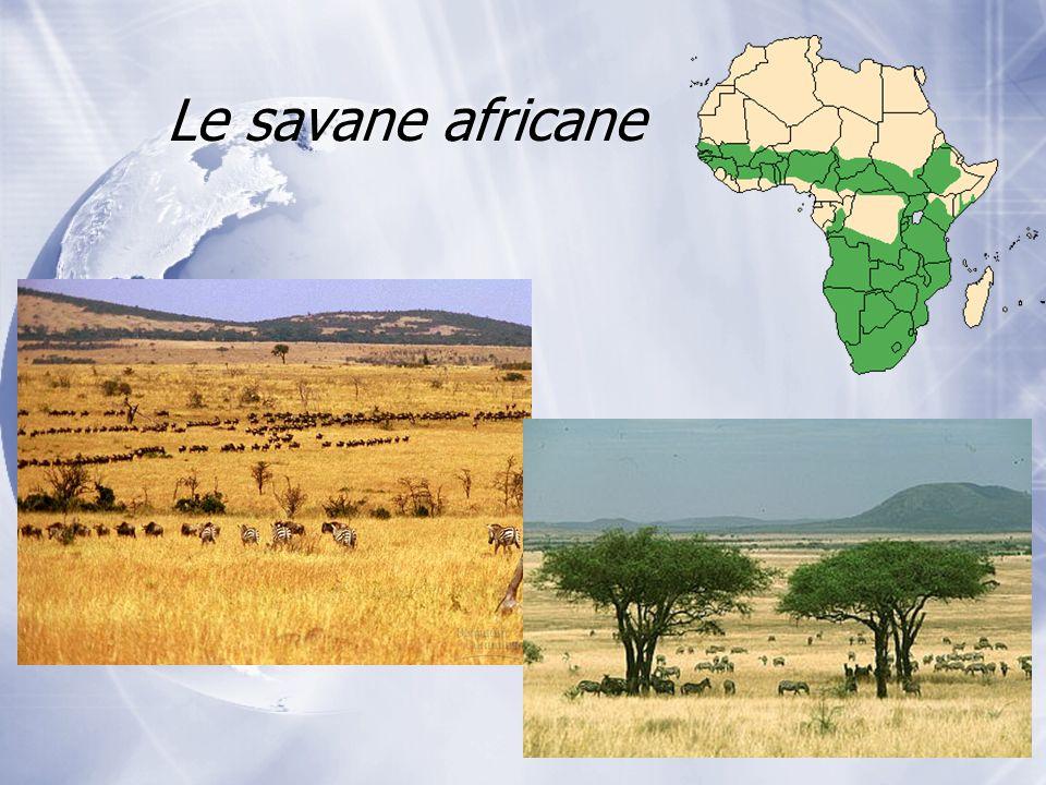 Le savane africane