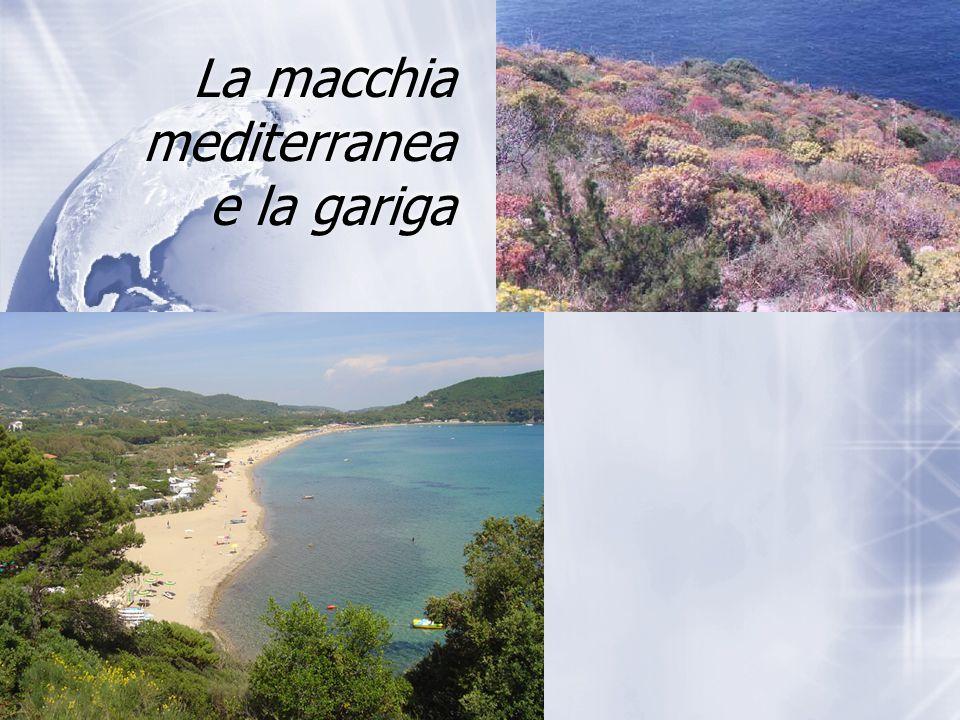 La macchia mediterranea e la gariga