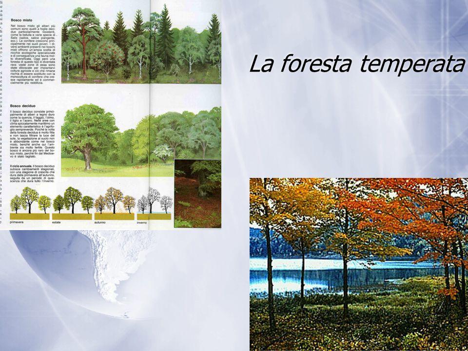 La foresta temperata