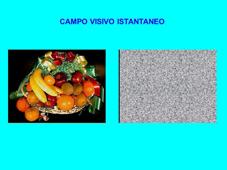 CAMPO VISIVO ISTANTANEO
