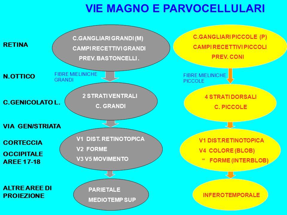 RETINA N.OTTICO C.GENICOLATO L.