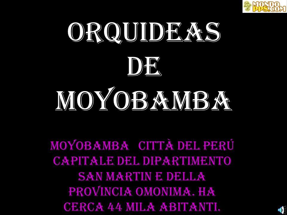 Moyobamba città del Perú capitale del dipartimento San Martin e della provincia omonima.