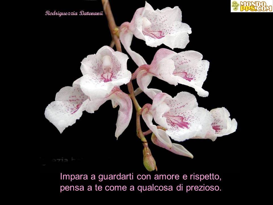 Se la tua felicità e la tua vita dipendono da un'altra persona, amala, senza chiedere niente in cambio.