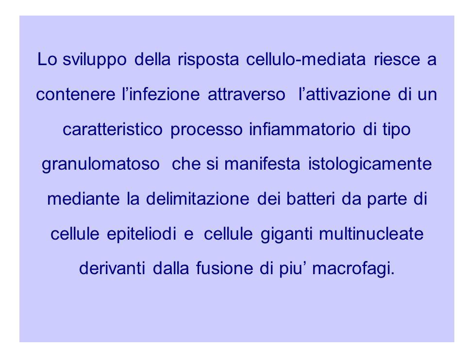 Lo sviluppo della risposta cellulo-mediata riesce a contenere l'infezione attraverso l'attivazione di un caratteristico processo infiammatorio di tipo