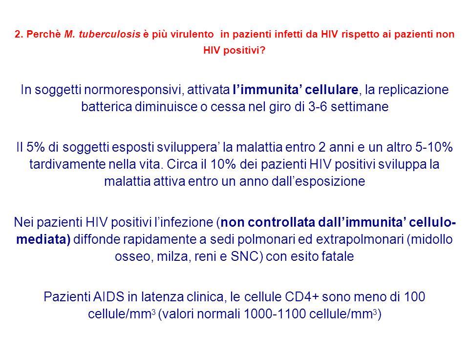 2. Perchè M. tuberculosis è più virulento in pazienti infetti da HIV rispetto ai pazienti non HIV positivi? In soggetti normoresponsivi, attivata l'im