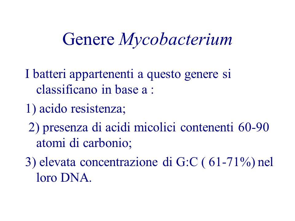 Genere Mycobacterium I batteri appartenenti a questo genere si classificano in base a : 1) acido resistenza; 2) presenza di acidi micolici contenenti