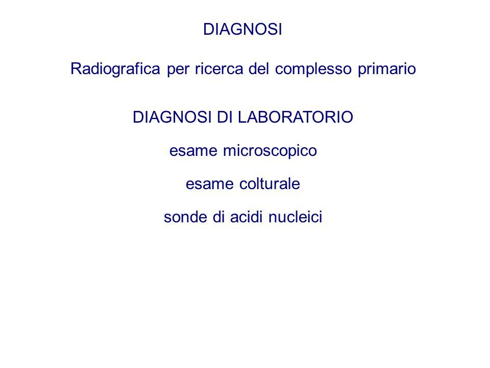 DIAGNOSI Radiografica per ricerca del complesso primario DIAGNOSI DI LABORATORIO esame microscopico esame colturale sonde di acidi nucleici