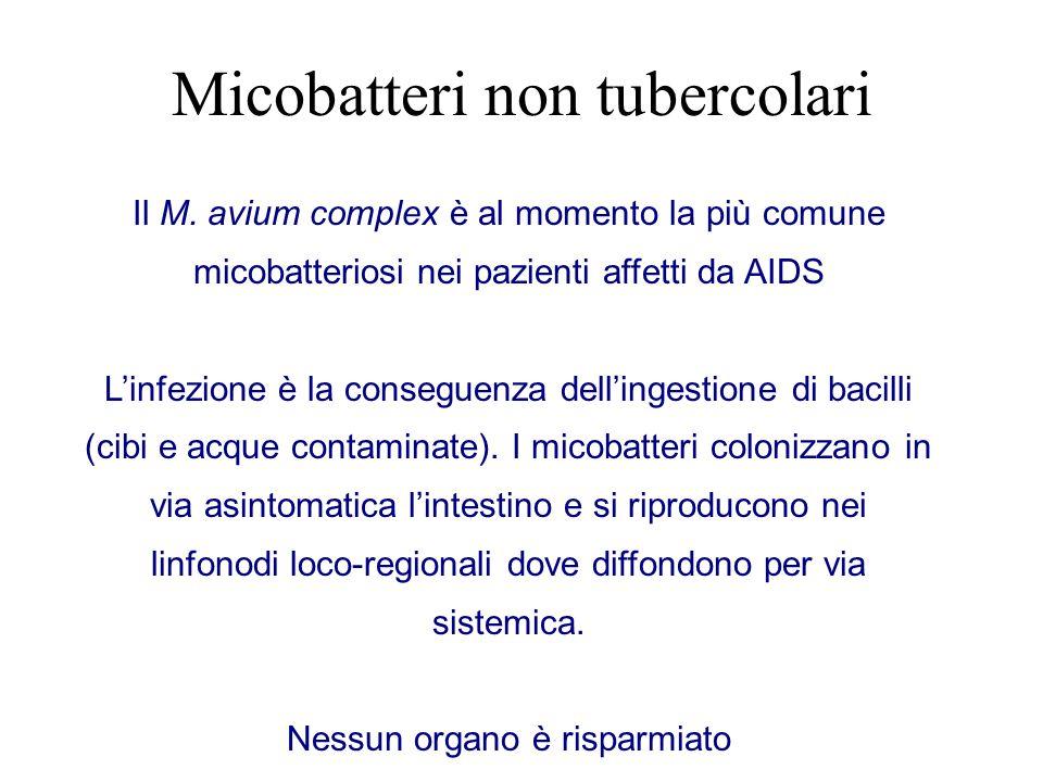 Il M. avium complex è al momento la più comune micobatteriosi nei pazienti affetti da AIDS L'infezione è la conseguenza dell'ingestione di bacilli (ci
