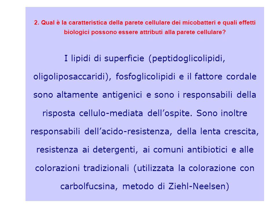 2. Qual è la caratteristica della parete cellulare dei micobatteri e quali effetti biologici possono essere attributi alla parete cellulare? I lipidi