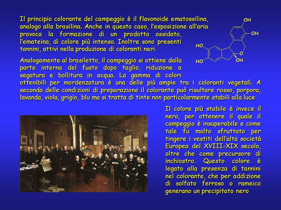 Il principio colorante del campeggio è il flavonoide ematossilina, analogo alla brasilina.