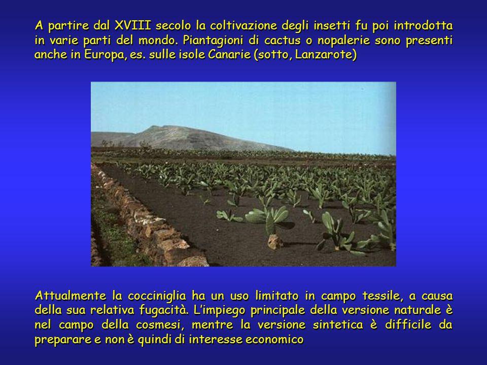 A partire dal XVIII secolo la coltivazione degli insetti fu poi introdotta in varie parti del mondo.