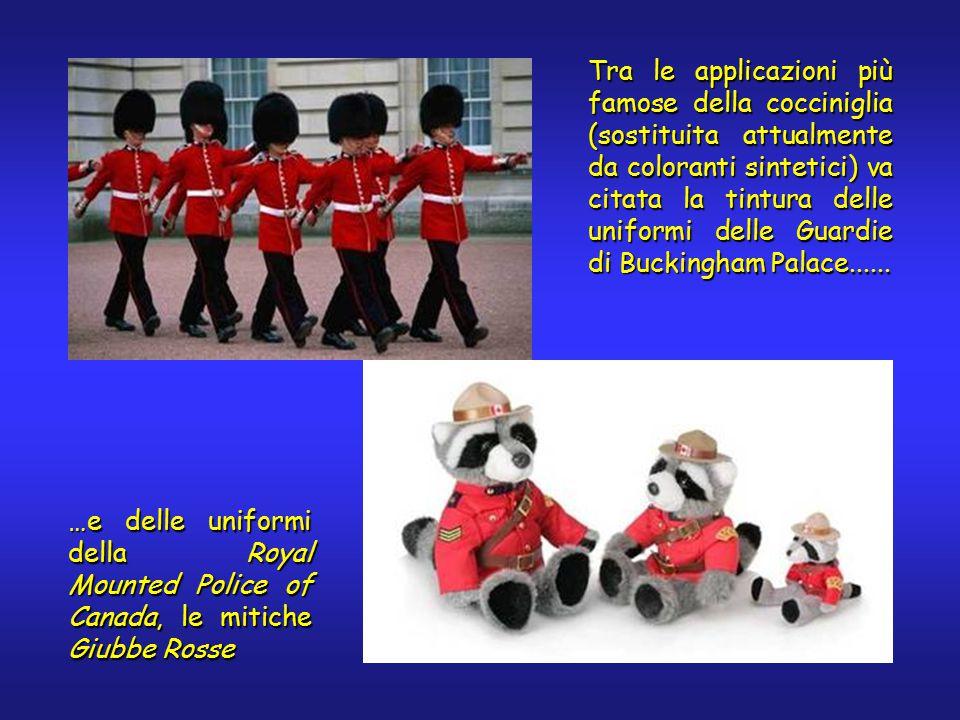 Tra le applicazioni più famose della cocciniglia (sostituita attualmente da coloranti sintetici) va citata la tintura delle uniformi delle Guardie di Buckingham Palace......