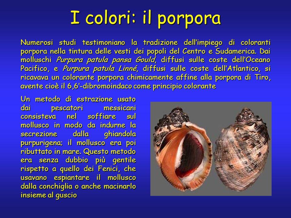 I colori: il porpora Numerosi studi testimoniano la tradizione dell'impiego di coloranti porpora nella tintura delle vesti dei popoli del Centro e Sudamerica.