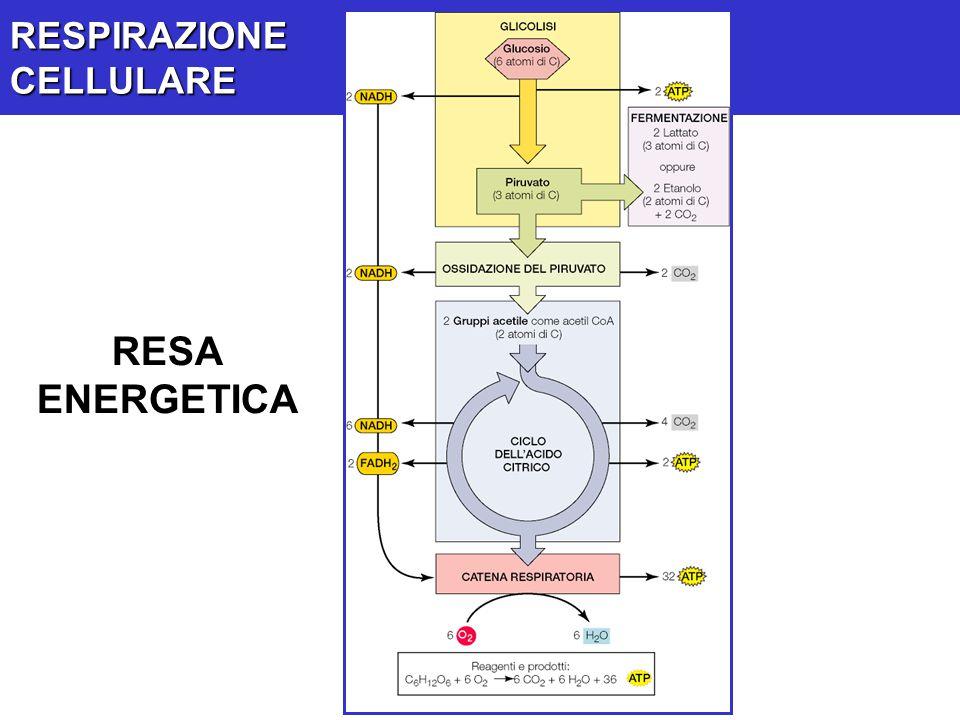RESPIRAZIONECELLULARE RESA ENERGETICA