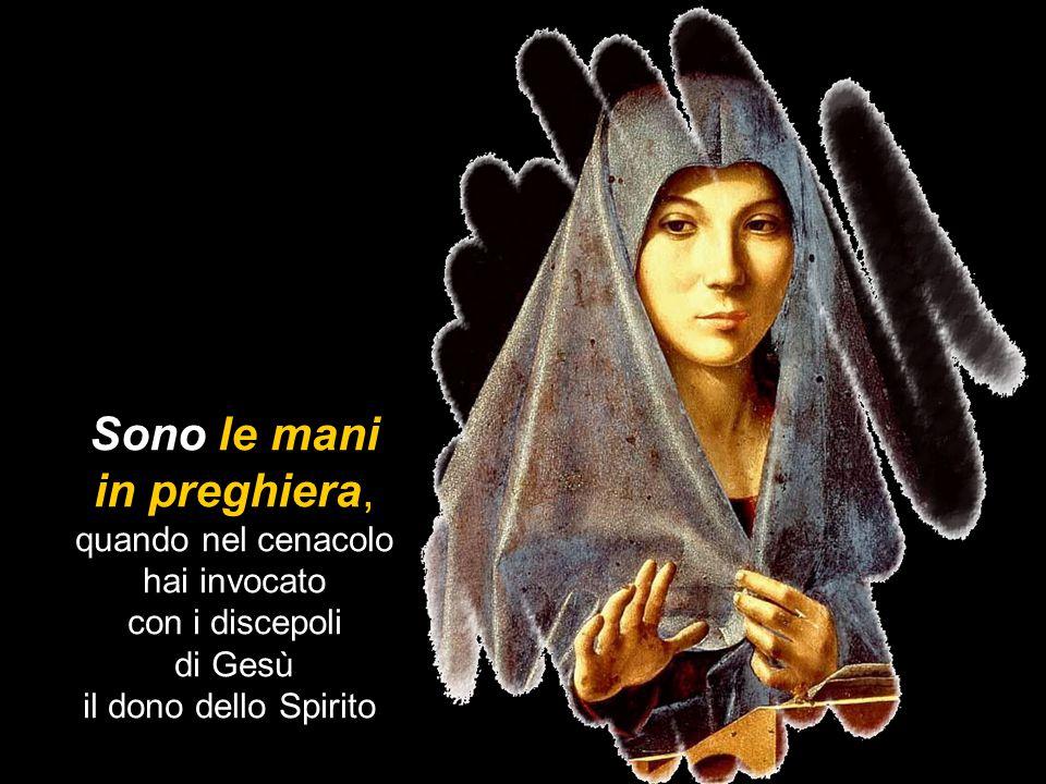 Sono le mani in preghiera, quando nel cenacolo hai invocato con i discepoli di Gesù il dono dello Spirito.