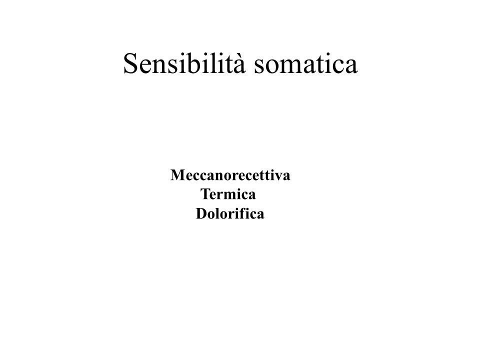 Sensibilità somatica Meccanorecettiva Termica Dolorifica