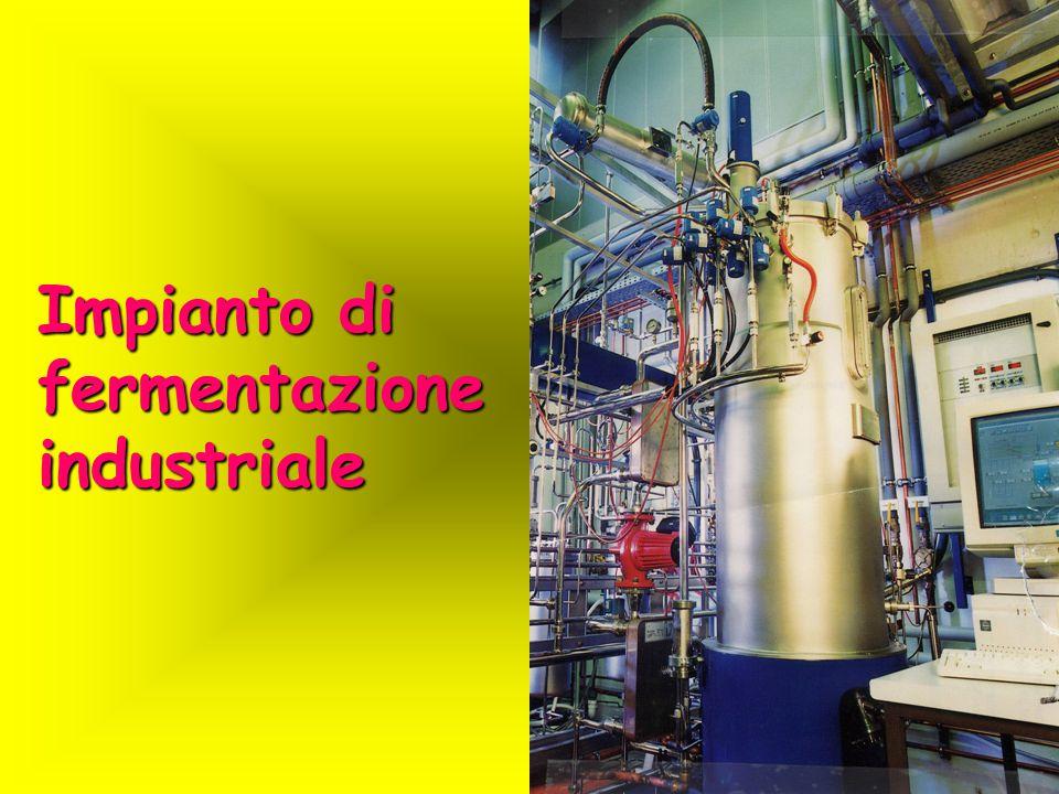 Impianto di fermentazione industriale