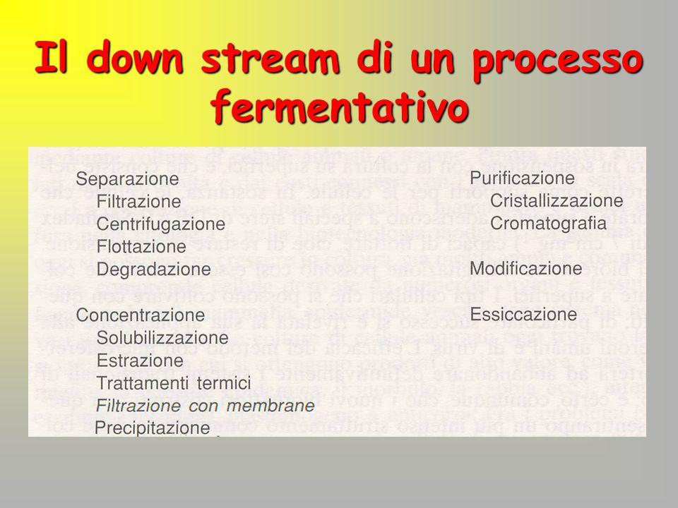 Il down stream di un processo fermentativo