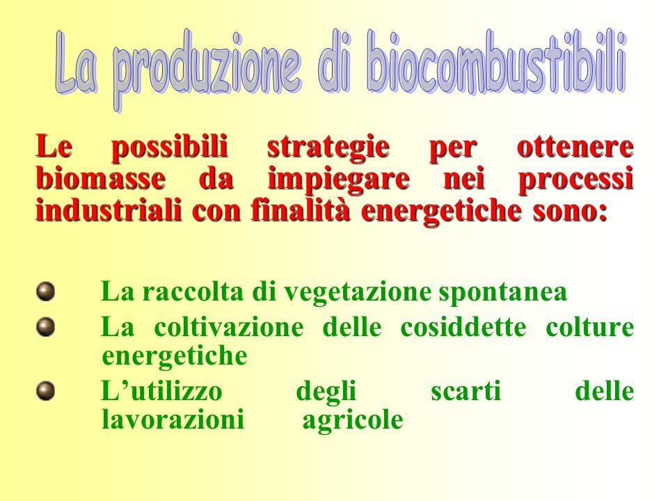 Le possibili strategie per ottenere biomasse da impiegare nei processi industriali con finalità energetiche sono: La raccolta di vegetazione spontanea