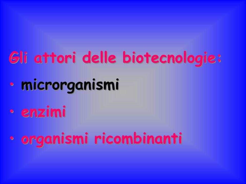 I microrganismi: giganti dell'industria osservabili al microscopio Nelle biotecnologie i microrganismi svolgono un ruolo chiave.