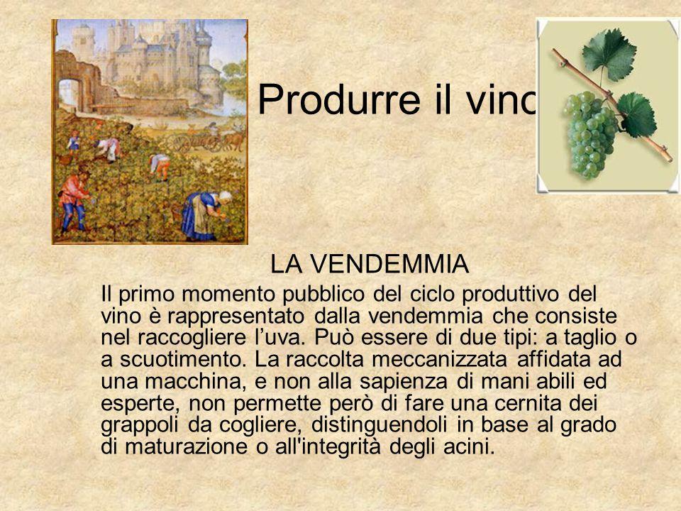 Il vino in Italia … e non solo Frascati! Le aziende vinicole italiane producono i migliori vini del mondo. Molte di queste aziende possono vantare ori