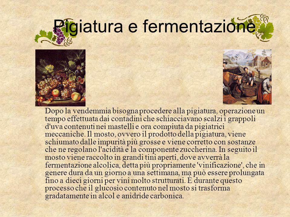 Produrre il vino LA VENDEMMIA Il primo momento pubblico del ciclo produttivo del vino è rappresentato dalla vendemmia che consiste nel raccogliere l'u