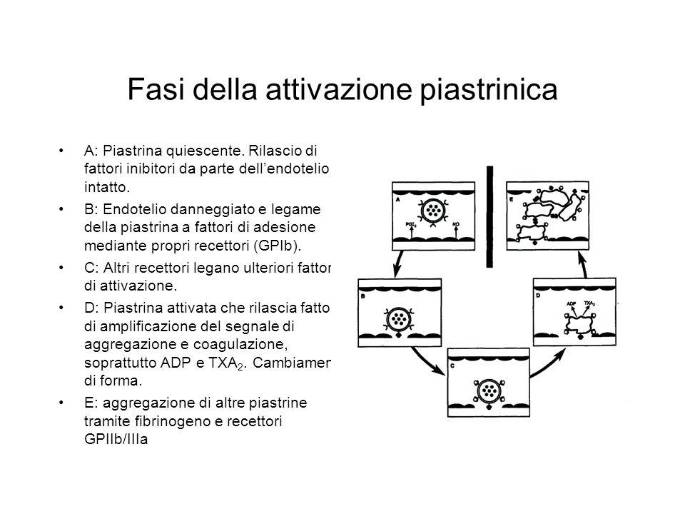 Cascata dell'acido arachidonico via PGH sintasi
