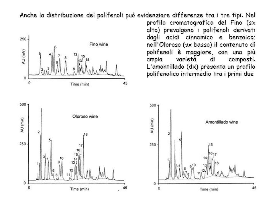 Anche la distribuzione dei polifenoli può evidenziare differenze tra i tre tipi.